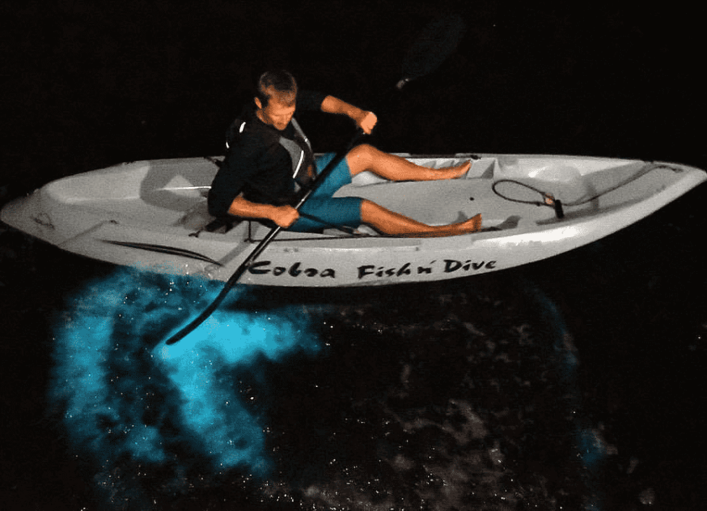 Bioluminescence Tours