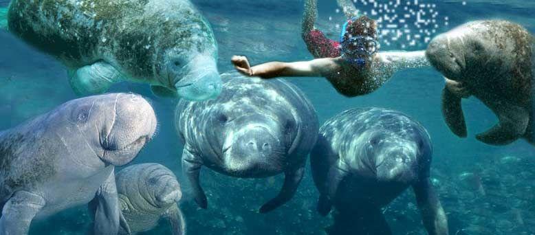 manati swim